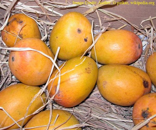 भारत का राष्ट्रीय फल - आम