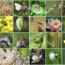 जैव विविधता