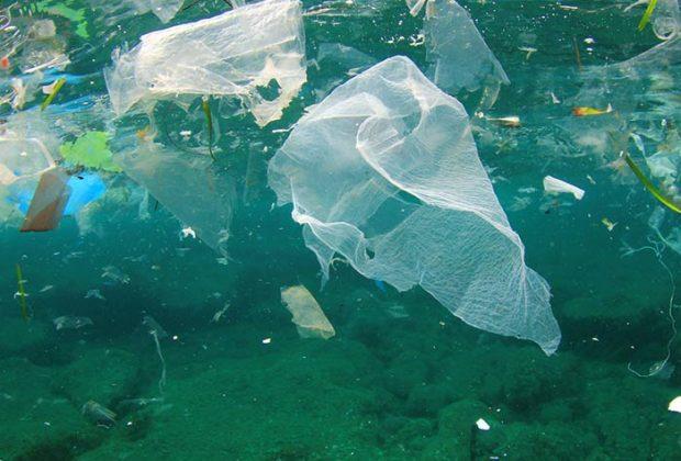 समुद्री जीवन पर प्लास्टिक बैगों द्वारा होने वाले दुष्प्रभाव