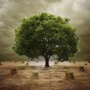 पेड़ बचाओ