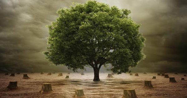 save trees in hindi Slogan on save trees in hindi font पेड़ बचाओ स्लोगन प्रकृति से हाथ मिलाओ पेड़ लगाओ पेड़ बचाओ प्रकृति के पूरक हैं ये पेड़ ना करो इन्हें यूँ ढ़ेर पेड़ से ही.
