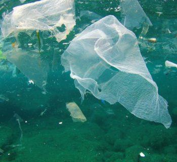 प्लास्टिक बैग को क्यों प्रतिबंधित किया जाना चाहिए
