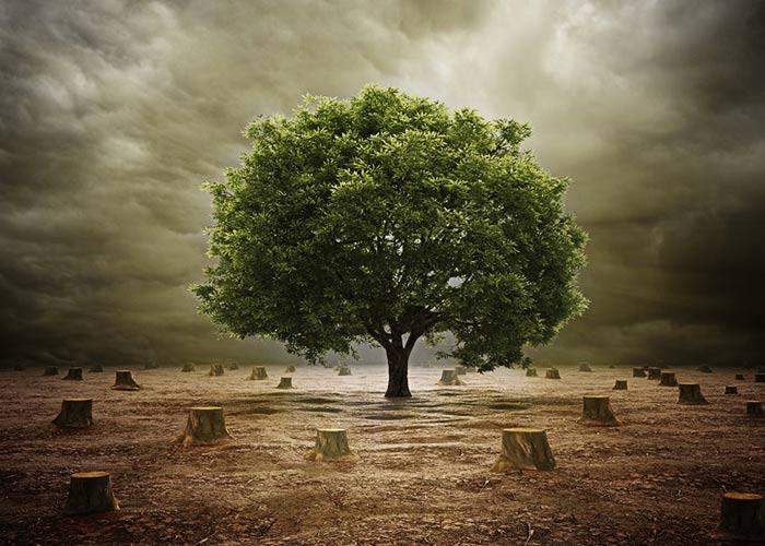 वनों की कटाई को रोकने के उपाय