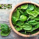 How Spinach is the World's Healthiest Food
