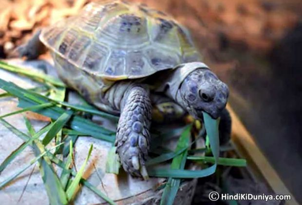 Benefits of Keeping Live Tortoise at Home