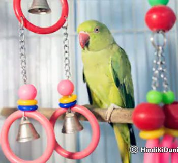 Keeping Parrot at Home Bring Good Luck