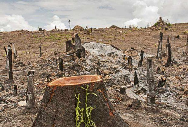 वनों की कटाई के परिणाम और दुष्प्रभाव