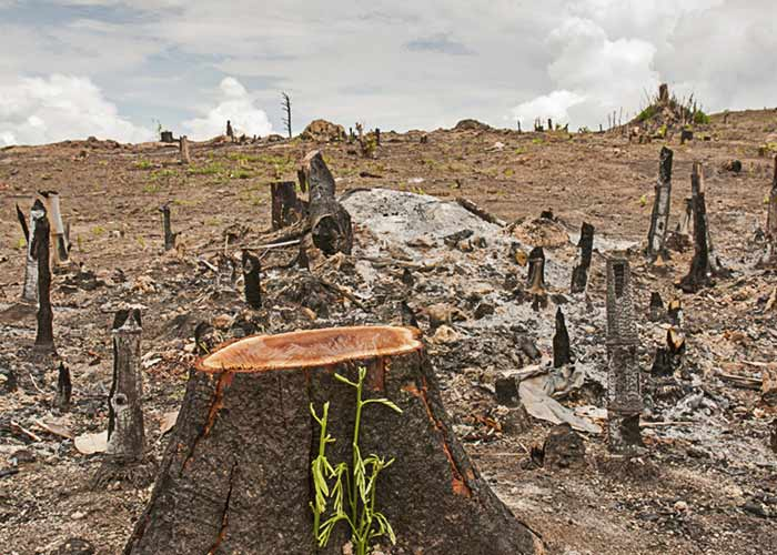deforestation in hindi What does this essay about deforestation is under threat in hindi language solution of the help term watch free essay essay service 1 deangelo jones from everett was looking for paper for school students essay a voluntary organization.