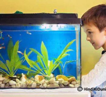 Topmost Reasons to Put a Fish Aquarium at Home