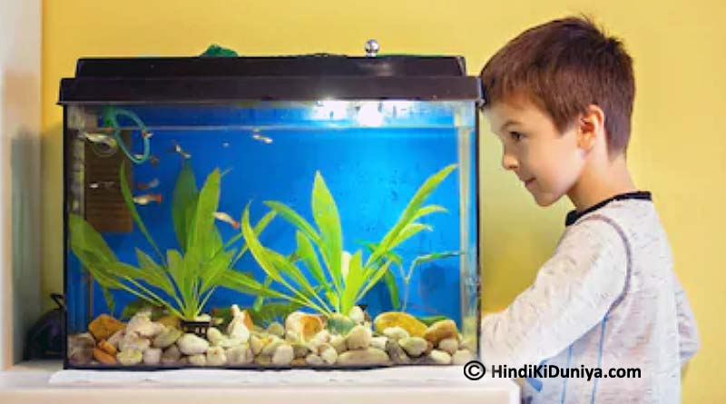 Topmost Reasons to Put a Fish Aquarium at Home