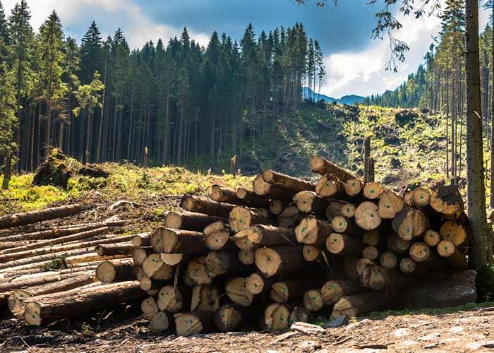 वनों की कटाई के कारण